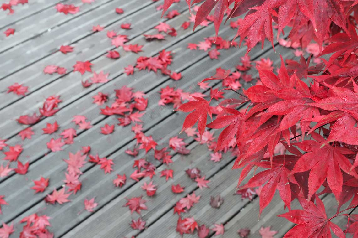 Percarbonate De Sodium Pour Terrasse Bois terrasses glissantes : comment éviter qu'elles deviennent